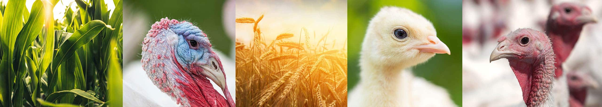 Farbest Foods Sustainability Graphic Header